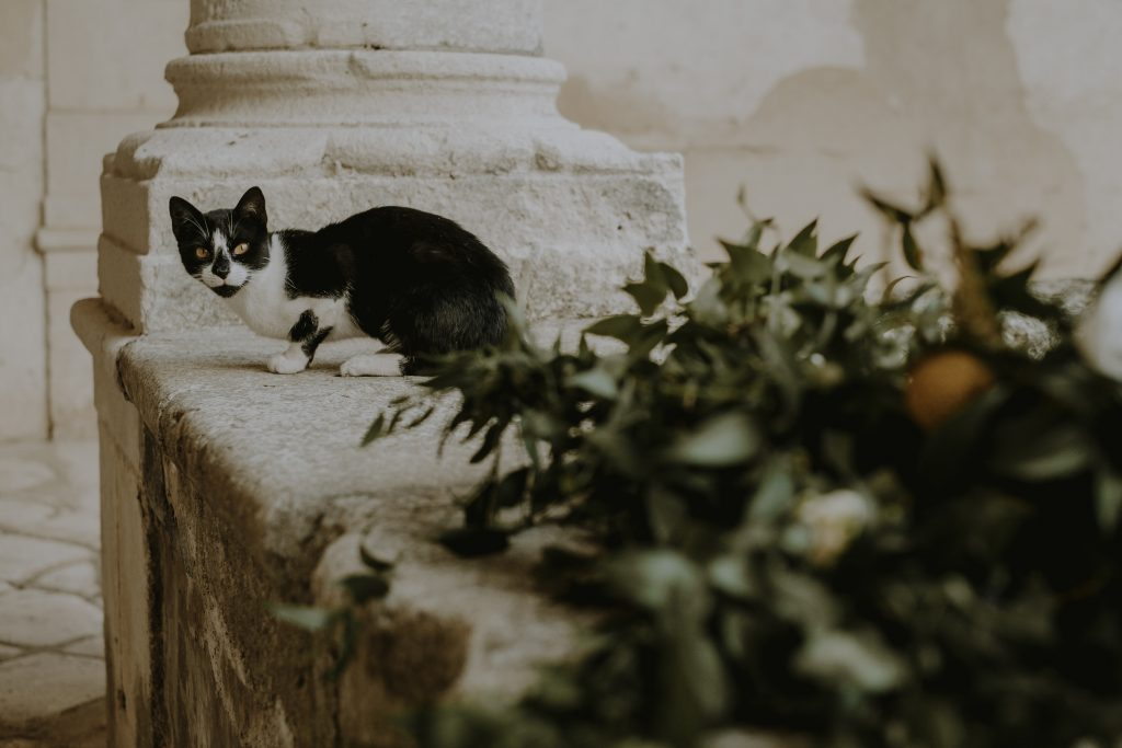 Matrimonio celtico in Sicilia (66)